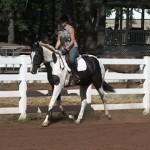 Sporthorse in Training Oregon