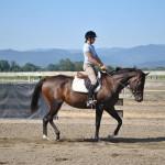 Sport Horse for sale Oregon