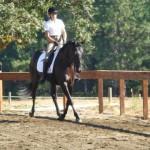 Esmerelda, sporthorse in training