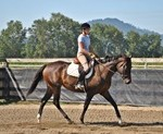 Libby, Oregon Sporthorse for sale