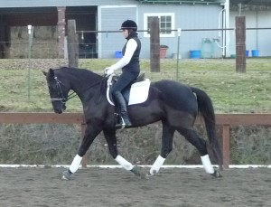 Warmblood in training with In Motion Sport Horses