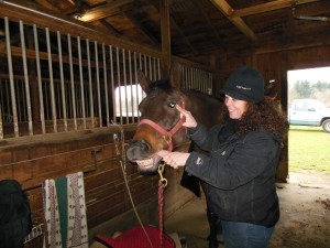 Warmblood getting body work done at In Motion Sport Horses