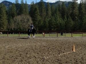 Sport Horse in Training