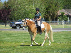 Carrie Allen riding a 3 yr old Haflinger