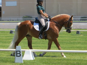 Carrie Allen riding a haflinger