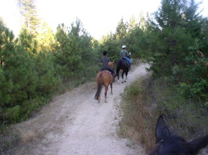 Trail riding with In Motion Sport Horses