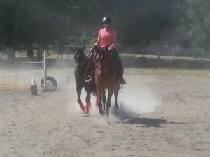 Carrie Allen Ponying Dressage Horses