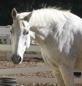 April horsey pics 06 041