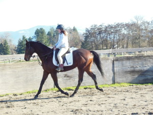 Horse Riding Lessons with In Motion Sport Horses