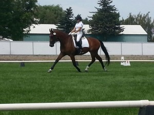 Tinkerbell Performing Medium Trot at Tulelake