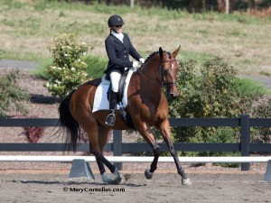 Carrie Allen Trainer of Warmblood Mare