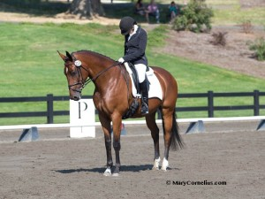 Warmblood/TB mare For Sale with In Motion Sport Horses